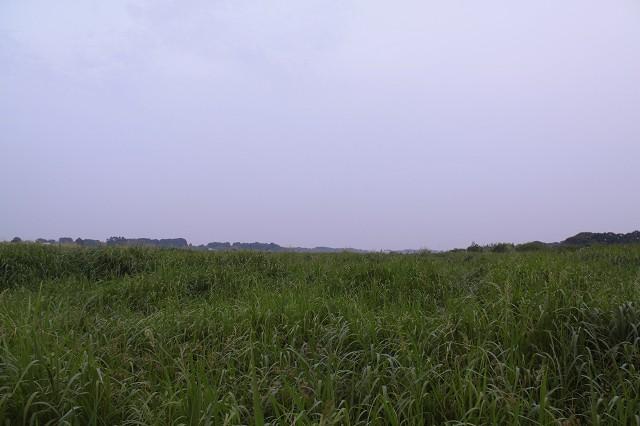 2010~07~31-IMG_7508.jpg