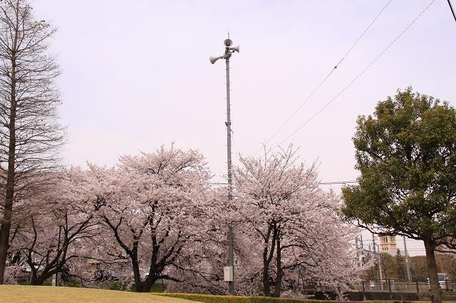 2011~04~11-IMG_4730.jpg