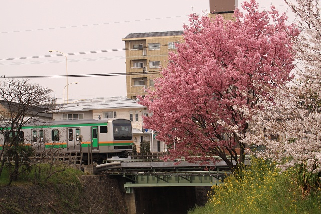 2011~04~11-IMG_4811.jpg