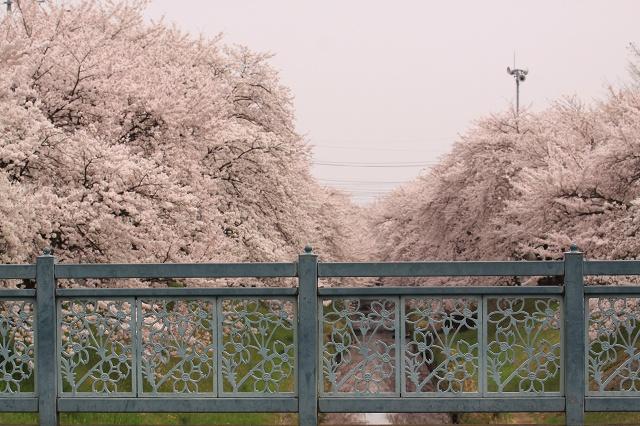 2011~04~11-IMG_4838.jpg