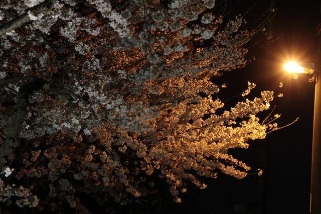2012~04~09-IMG_8665.jpg