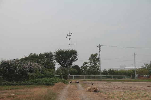 2012~08~11-IMG_7291.jpg