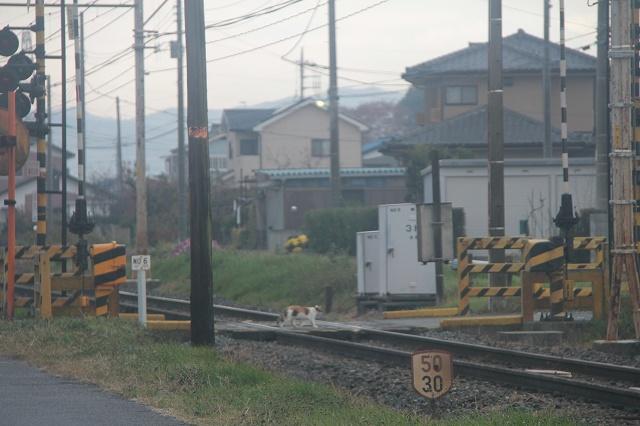 2012~12~01-IMG_5494.jpg