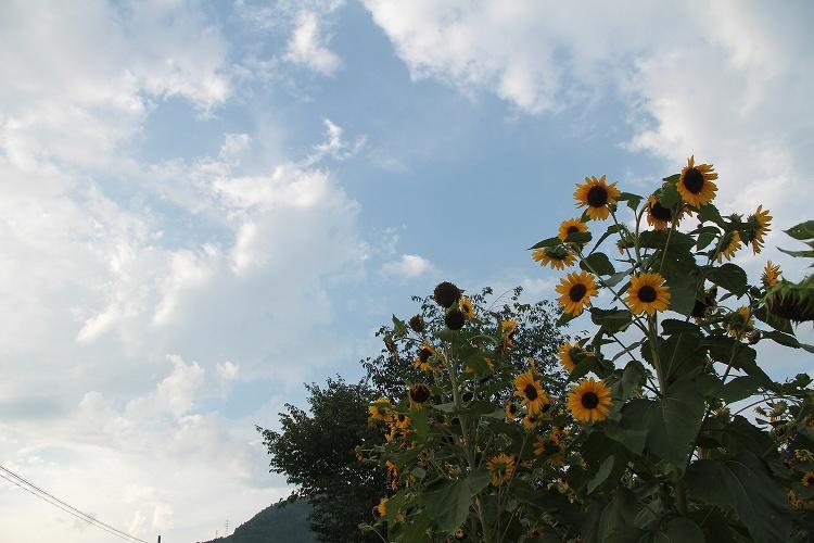 2014~08~01-IMG_3868.jpg