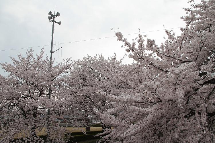 2015~04~03-IMG_2272.jpg