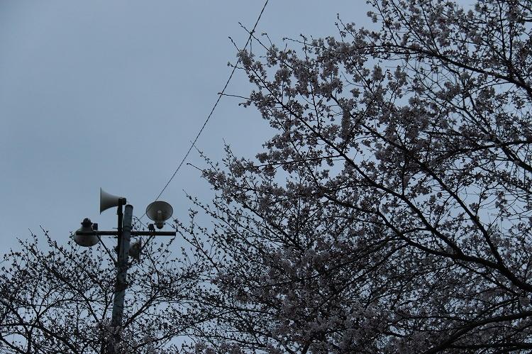 2019_03_29-IMG_0065.jpg